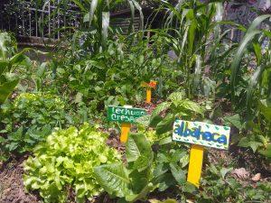 Agricultura urbana en Medellín